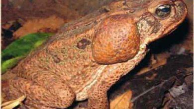 Foto de O que são espécies exóticas