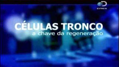 Foto de Células Tronco: A Chave da Regeneração (Dublado) Documentário