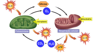 Foto de Fotossíntese e respiração celular