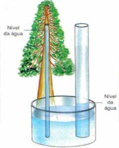 força de adesão da água