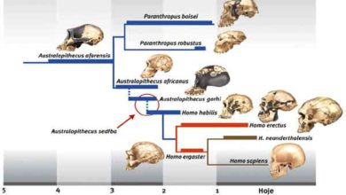 Photo of Evolução dos seres humanos – linha do tempo da evolução humana