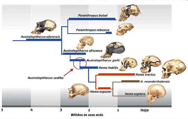 Evolução dos seres humanos - linha do tempo da evolução humana