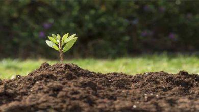 Foto de Conservação do solo
